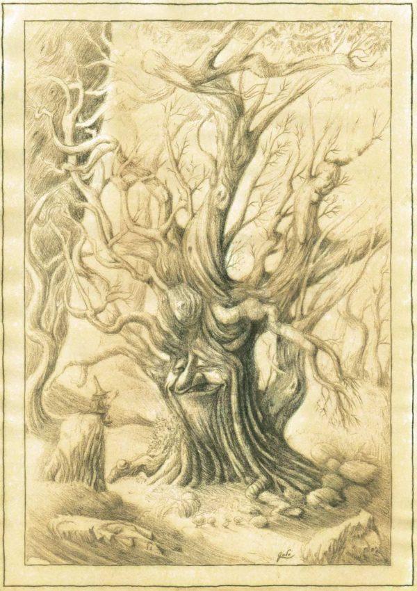 parchemin de féerie, illustration représentant un arbre trogne et un gnome