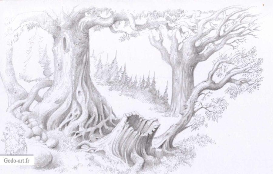 dessin graphite clairière souche